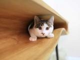 Trys pietų stalo idėjos, kurios patiks ir jūsų katei