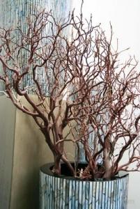 Manzanita brown