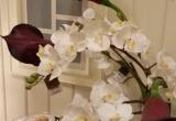 Nauja gėlių siunta iš Prancūzijos