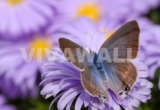 Fototapetai Drugelis ant gėlės