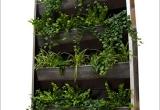 Augalinės sienelės